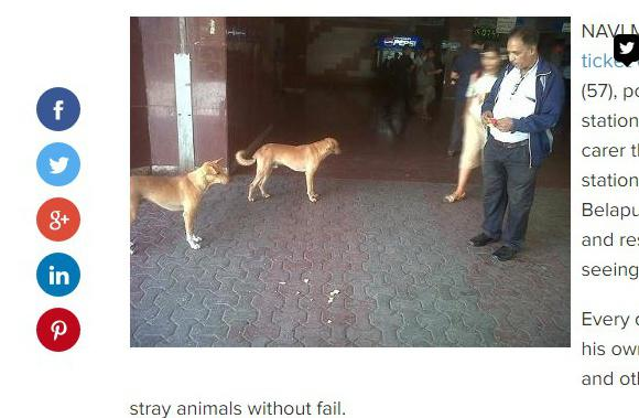All station strays are friends of this railway ticket checker